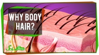 Why Body Hair?