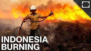 Why Is Indonesia On Fire?
