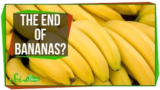 Bananas Are Losing the War on Fungus