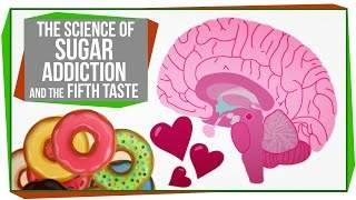 The Science of Sugar Addiction & The Fifth Taste