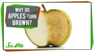 Why Do Apples Turn Brown?