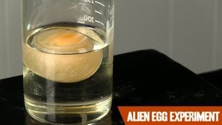 The Alien Egg Experiment