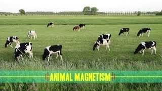 Animal Magnetism: How Animals Navigate