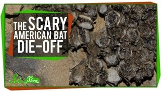 The Scary American Bat Die-Off