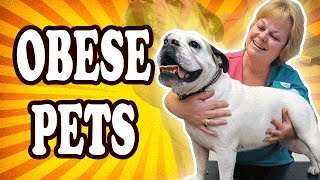 Top 10 Most Obese Animals — TopTenzNet