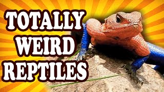 Top 10 Weirdest Reptiles on the Planet — TopTenzNet