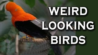 Top 10 Birds That Look Photoshopped