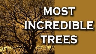Top 10 Incredible Trees (and their stories)