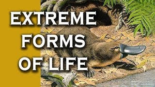 Top 10 Extreme Forms of Life