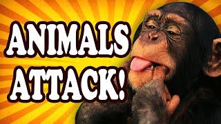 Top 10 Weird Times that Animals Got a Taste for Human — TopTenzNet