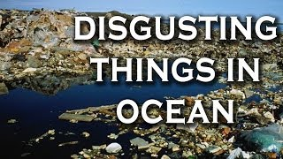 Top 10 Most Disgusting Things We've Done To Our Ocean