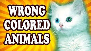 Top 10 Animals That Are The Wrong Color — TopTenzNet