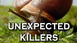 Top 10 Unexpected Killers in Nature