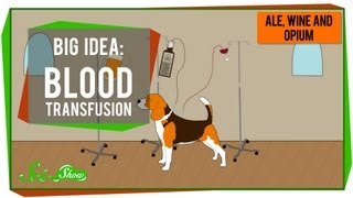 Big Idea: Blood Transfusions