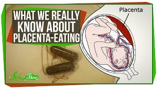 What We Really Know About Placenta-Eating