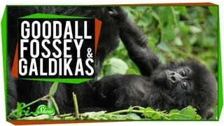Goodall, Fossey & Galdikas: Great Minds