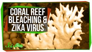 Bleaching in the Great Barrier Reef, and a Zika Update