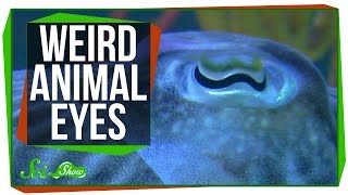 9 Weird Ways Animals See the World