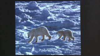 "Jenny Ross & Kassie Siegel: ""Polar Bears"" 