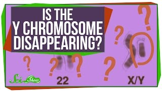 Is the Y Chromosome Disappearing?