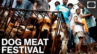 China's Controversial Dog Meat Festival