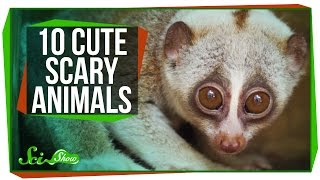 10 Cute Animals With Secretly Scary Behaviors