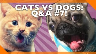 Cats Vs Dogs, And Other Important Questions: Q&A #7!