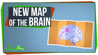 A New Map of the Human Brain!