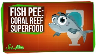 Fish Pee: The Coral Reef Superfood