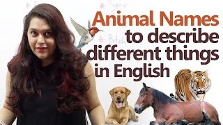 Animal names to describe different things – Spoken English lesson