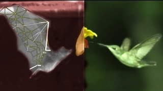 BAT Flight vs BIRDS, with SLOWMO, robots, swimming and treadmills - Smarter Every Day 87