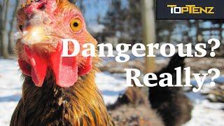 Top 10 SHOCKINGLY Dangerous ANIMALS