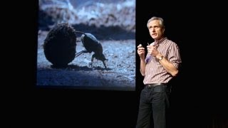 Marcus Byrne: The dance of the dung beetle