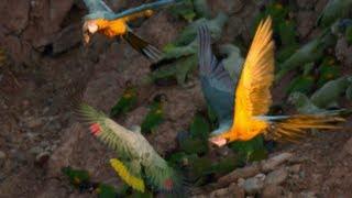 Bird Flight - Deep Dive #2 - Smarter Every Day 61