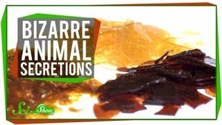 7 Bizarre Uses for Animal Secretions