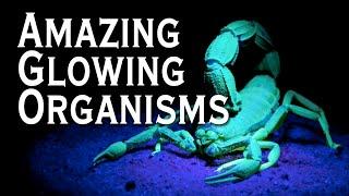Top 10 Amazing Bioluminescent Organisms - Toptenz.net