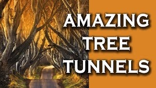 Top 10 Incredibly Beautiful Tree Tunnels