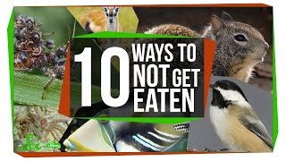 10 Bizarre Ways to Avoid Being Dinner?