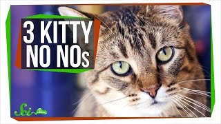 3 Things Your Cat Should Not Be Doing