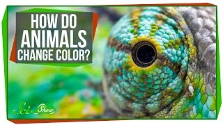 How Do Animals Change Color?