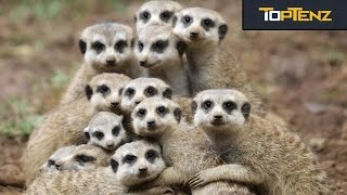 Top 10 Adorable ANIMALS You Didn't Know Were VICIOUS CANNIBALS