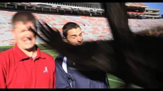 Auburn Eagle Punches Alabama Fan
