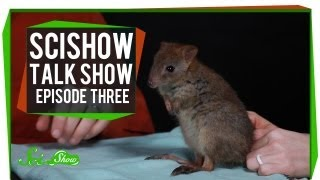 Katherine, Cats and a Brush-tailed Bettong: SciShow Talk Show Episode 3