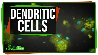 Dendritic Cells: Scishow Talk Show