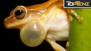 Top 10 Things That Would Happen WITHOUT FROGS