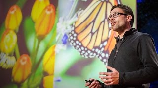Jaap de Roode: How butterflies self-medicate