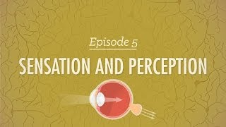 Sensation & Perception - Crash Course Psychology #5