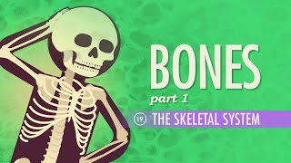The Skeletal System: Crash Course A&P #19