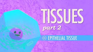 Tissues, Part 2 - Epithelial Tissue: Crash Course A&P #3