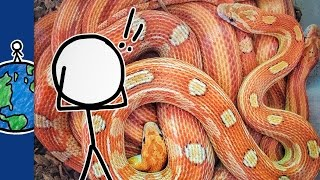 Why Are Snakes So Creepy?